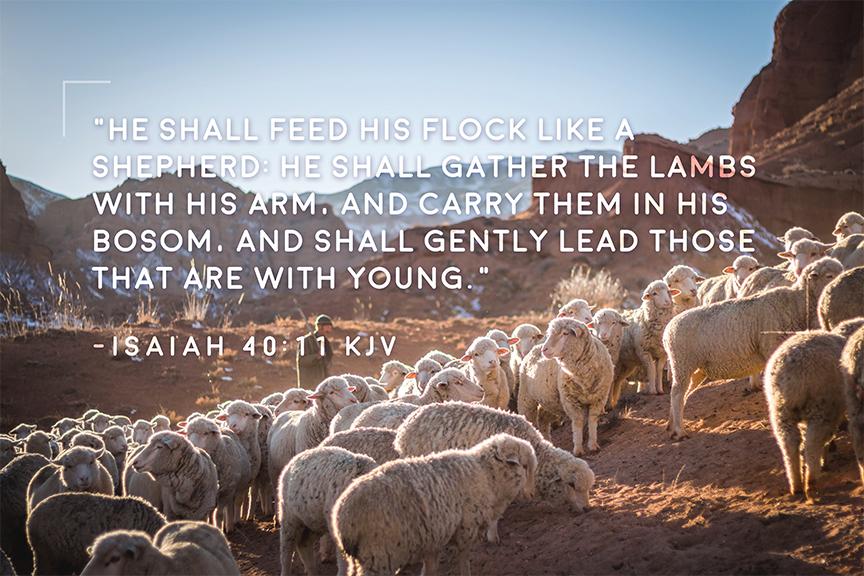 He shall feed his flock like a shepherd
